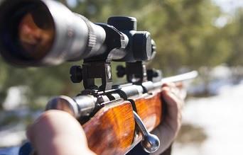 22 LR Rifle Versatilty